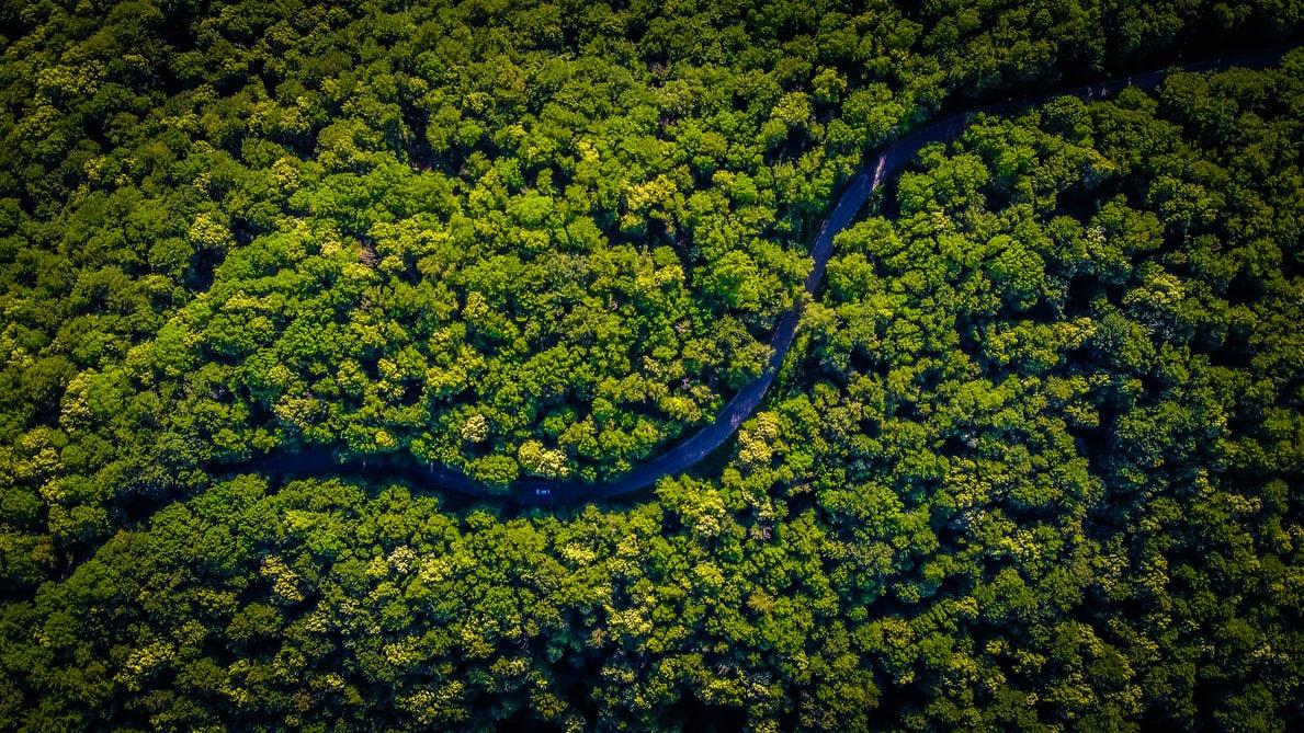 Dia da Amazônia: Floresta de feridasabertas